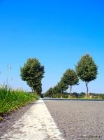 Häsewig - Landstrasse bei Häsewig (klick für Vollbild)
