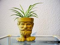 Kopf und Fuß - Blumentopf mit Pflanze - Kopf und Fuß (klick für Vollbild)