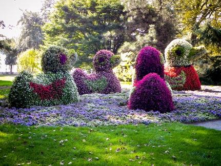 Blumen Enten -- Insel Mainau - Blumen Enten auf Insel Mainau in Baden Würtemberg am Bodensee