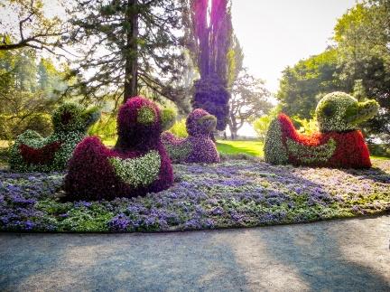 Blumenenten -- Insel Mainau - Blumen Enten auf Insel Mainau in Baden-Würtemberg