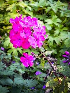 Blumenpracht -- Insel Mainau - Blumenpracht auf Insel Mainau am Bodensee