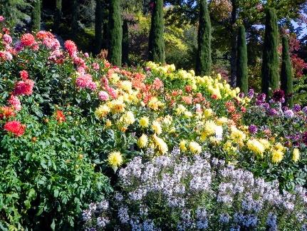 Blumenpracht -- Insel Mainau - Dahlien und Blumenpracht auf Insel Mainau am Bodensee