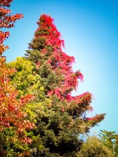 Baum im Herbst -- Insel Mainau - Baum im Herbst auf Insel Mainau