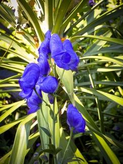 Blumenpracht -- Insel Mainau