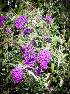 Blumenpracht -- Insel Mainau - Blumenpracht auf Insel Mainau