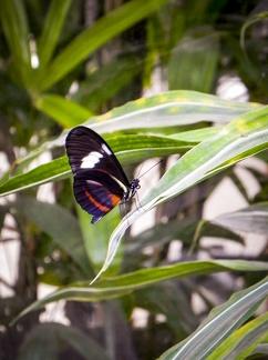 Schmetterling -- Insel Mainau - Schmetterlingshaus auf Insel Mainau in Baden Würtemberg