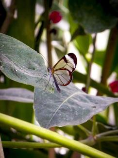Schmetterling -- Insel Mainau - Schmetterling auf dem Blatt auf Insel Mainau am Bodensee
