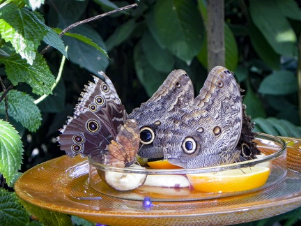 Schmetterlingshaus -- Insel Mainau - Schmetterlingshaus auf Insel Mainau