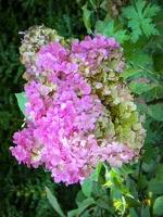 Insel Mainau - Blumenpracht auf Insel Mainau (klick für Vollbild)